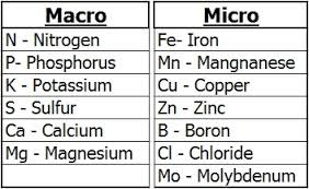 Macronutrients and Micronutrients - Importance for Plants & Deficiency Symptoms - forestrypedia.com