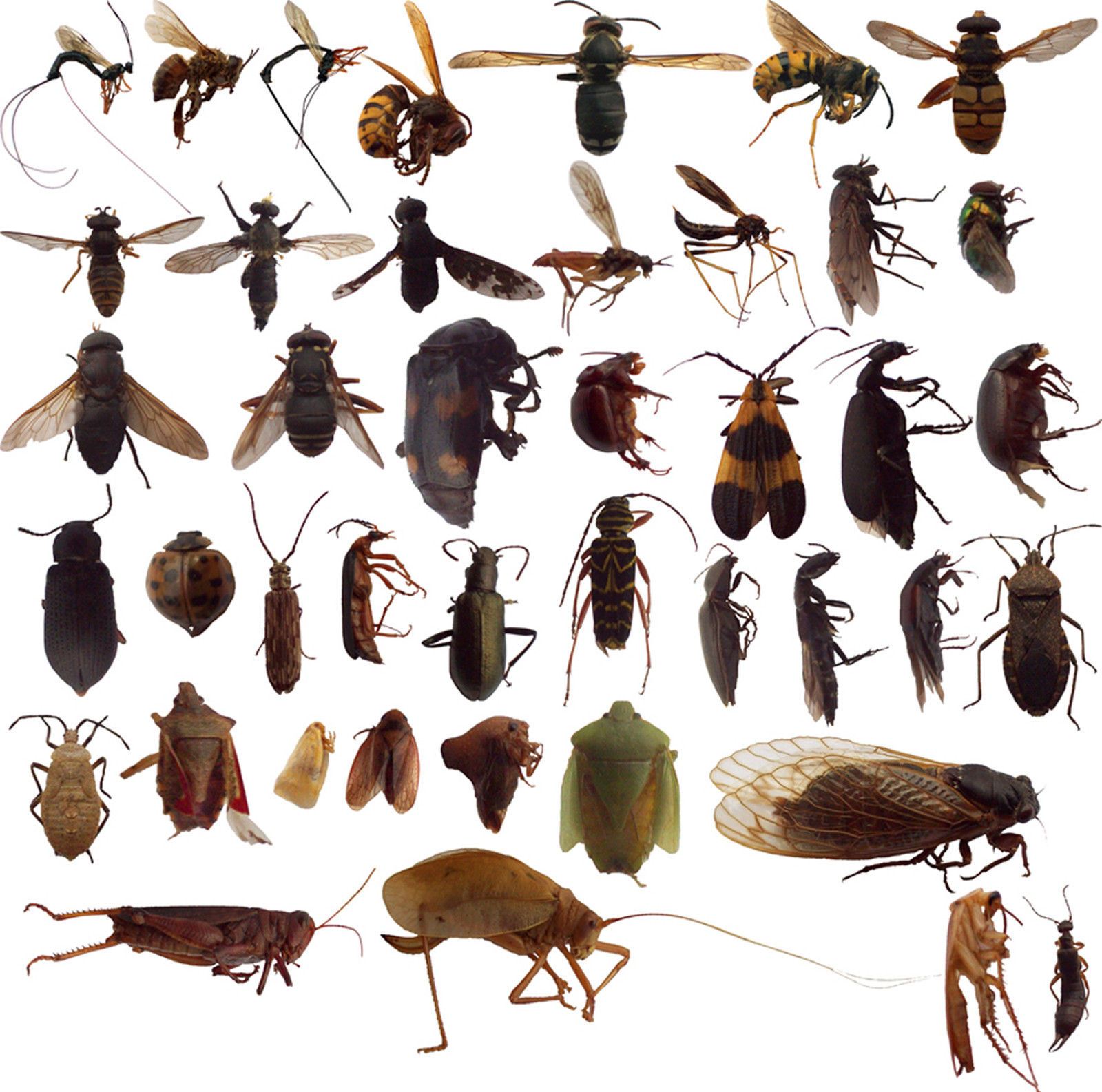 Classification of Bugs - forestrypedia.com