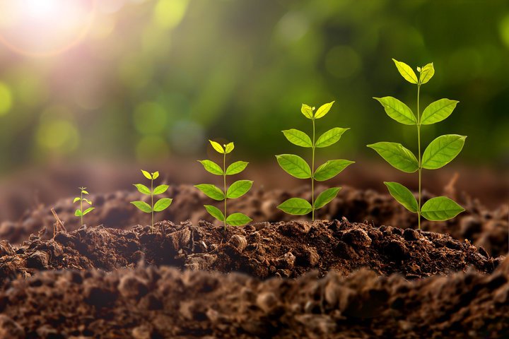 Function of Soil for Plant Growth - Planting Techniques - Forestrypedia