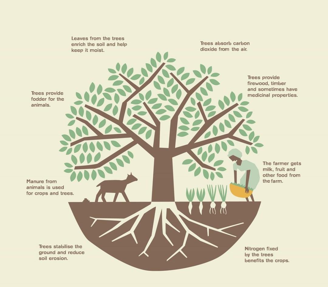 Agroforestry System - forestrypedia