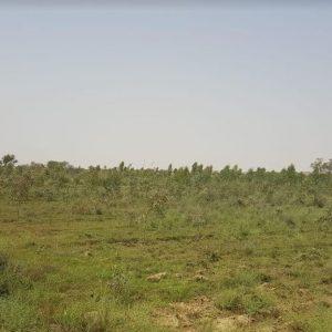 Afforestation - Forestrypedia