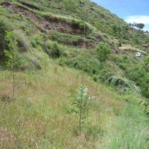 Afforestation on Slopes - Forestrypedia
