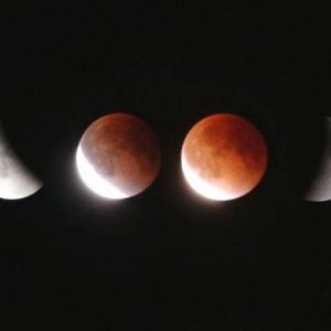 The Longest Eclipse - Forestrypedia