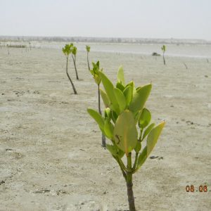 Afforestation of Coastal, Inland and Sand Dunes - Forestrypedia