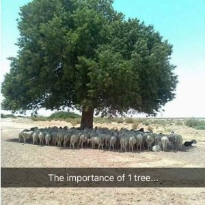 Importance of Trees - Forestrypedia