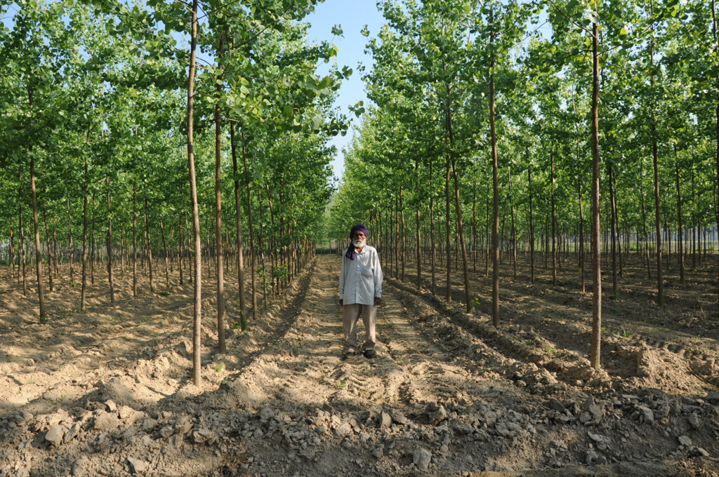 Introduction to Agro and Farm Forestry. Environmental/Ecological Benefits. Concepts, Classification, Systems, Resources and Establishment. - forestrypedia.com