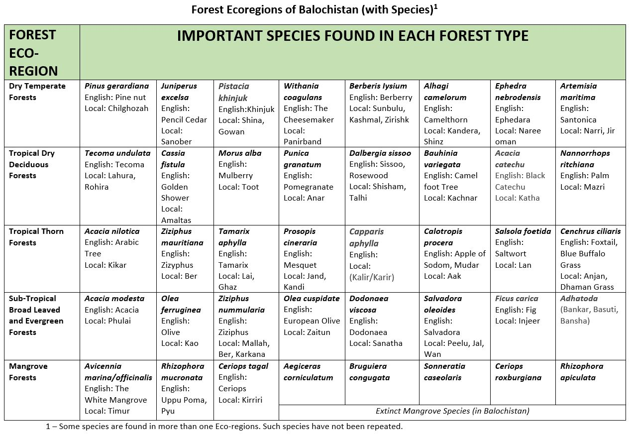 Forest Ecoregions of Balochistan with Species Forest Types of Balochistan - Forestrypedia