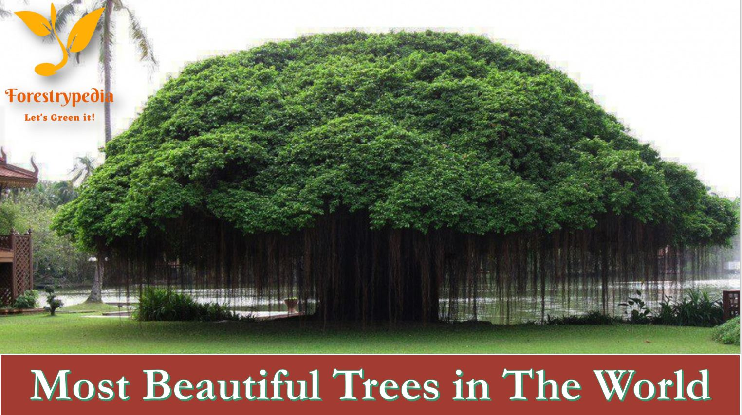 The 14 Most Beautiful Trees in The World - Forestrypedia