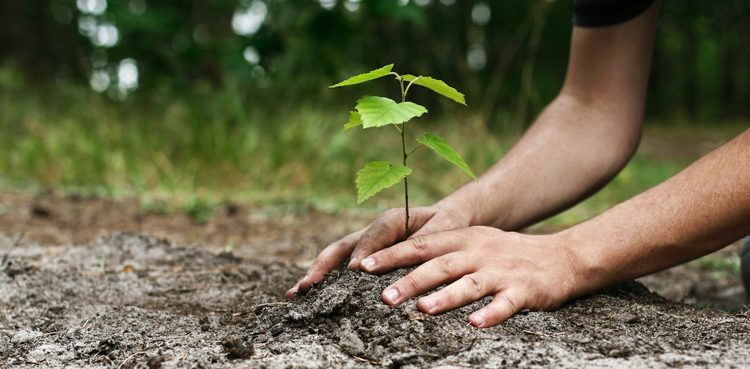 In the course of one generation, no less than 525 billion can be planted under this initiative - Forestrypedia