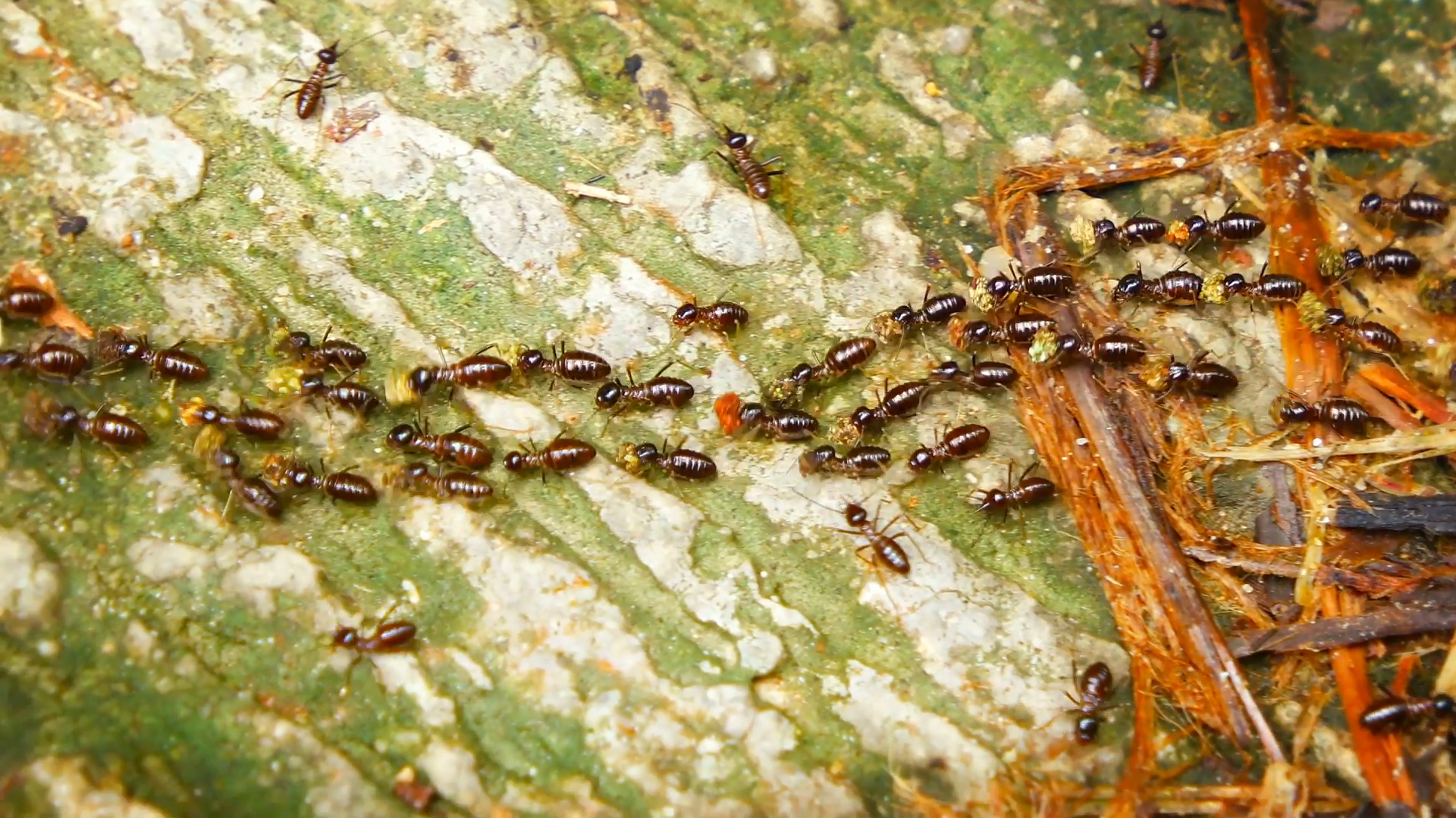 During Drought Termites Protect Tropical Rainforests - Forestrypedia