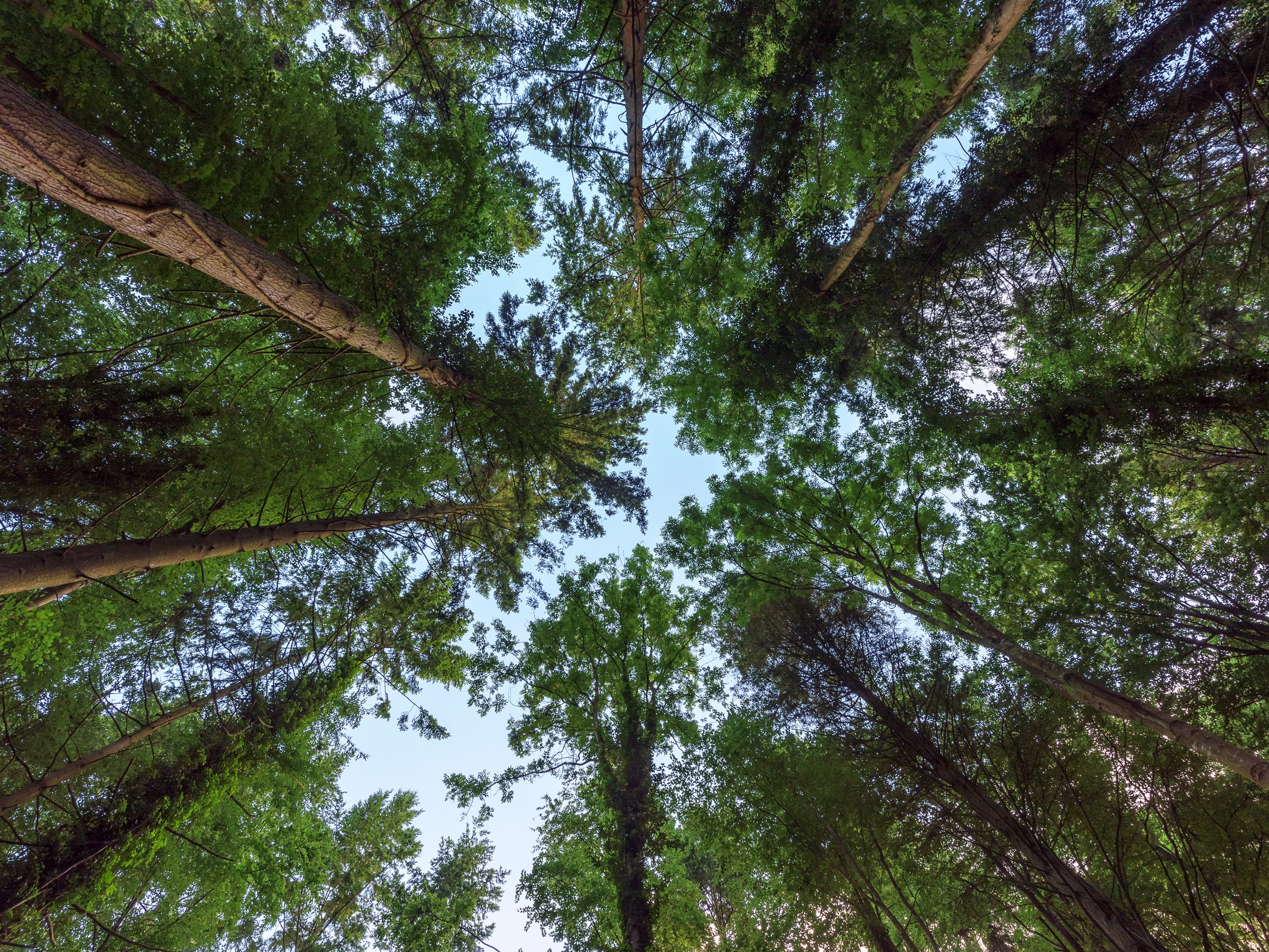 8 Amazing Facts about Forests - Forestrypedia