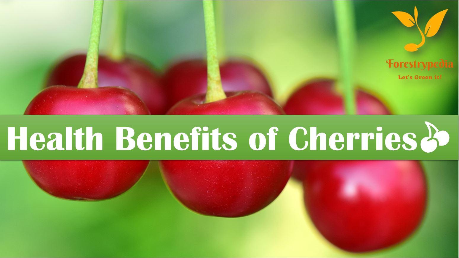 5 Health Benefits of Cherries - Forestrypedia
