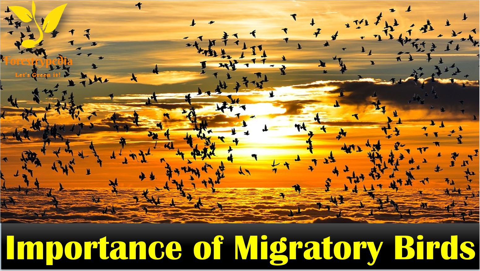 Importance of Migratory Birds - Forestrypedia