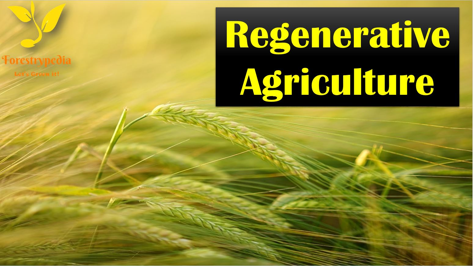 What Is The Importance of Regenerative Agriculture? - Forestrypedia