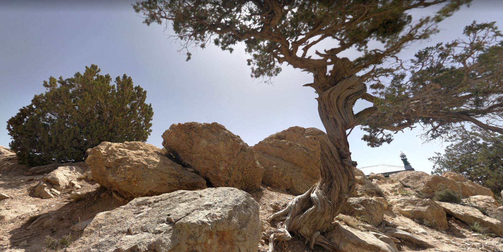 The Juniper Forests of Harboi Kalat Balochistan - forestrypedia.com
